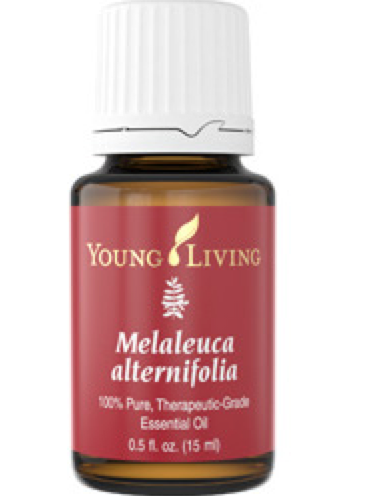 Tea tree essential oil, Melaleuca essential oil, Young living essential oils