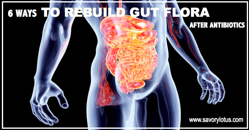 6 Ways To Rebuild Gut Flora After Antibiotics Savory Lotus